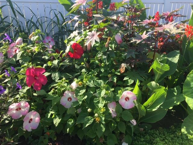 Flowers Galore